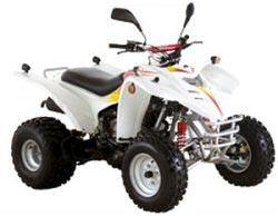 Avis quad ADLY 300 Thunderbike